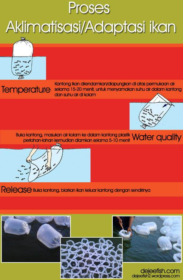 aklimatisasi-ikan